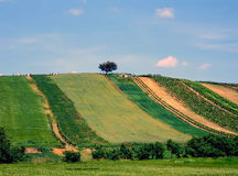 Fields-summer. Agriculture fields in summer, Austria stock image