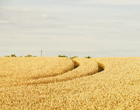 Fields in Summer Royalty Free Stock Images