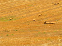Fields in summer royalty free stock photos