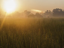 Fields Sunrise Royalty Free Stock Photography