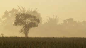 Fields and Sunrise Royalty Free Stock Photography