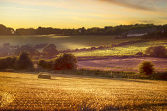 Fields at the sunset Royalty Free Stock Photo