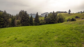 Fields in the swiss Alps Royalty Free Stock Image