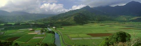 Fields of Taro, Stock Photos