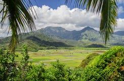 Fields of Taro, Hanalei Valley, Kauai, Hawaii Royalty Free Stock Image