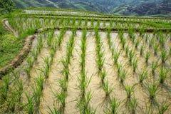 fields terraced Стоковые Фотографии RF