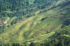 fields terraced Стоковое фото RF