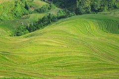fields terraced Стоковые Фото