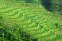 fields terraced Стоковое Фото