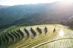 fields terraced Стоковая Фотография RF