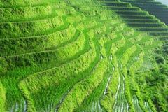 fields terraced Стоковое Изображение