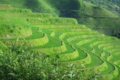 fields terraced Стоковое Изображение RF
