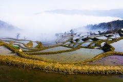 fields terraced Стоковые Изображения