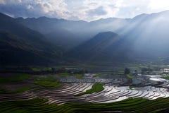 fields terrasserad rice Royaltyfri Foto
