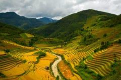 fields terrasserad rice Arkivfoton