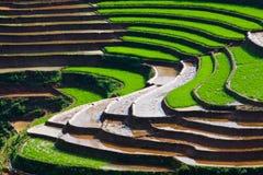 fields terrasserad rice Arkivbild