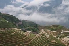 fields terrasserad rice Arkivbilder