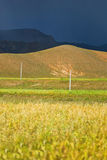Fields in Tibetan landscape Royalty Free Stock Photography