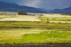 Fields in Tibetan landscape Royalty Free Stock Photos
