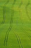 Fields with tractor tracks Stock Photo