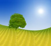 Fields and tree - illustration Stock Photography