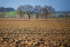 Fields with Tree. Spring Time Stock Photos