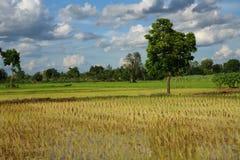 Fields treen. Royaltyfri Bild