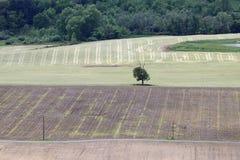 fields treen Royaltyfri Fotografi