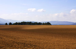 Fields and trees Stock Images