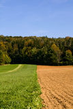 Fields and trees Stock Image
