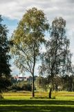 Fields and trees. Green fields and high trees and cloister Stock Image