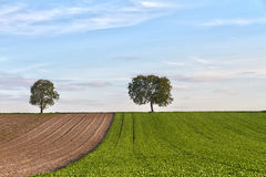 Fields with trees, Pfalz, Germany Stock Image
