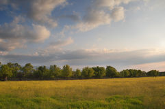 Fields and trees at sunset light Royalty Free Stock Photo