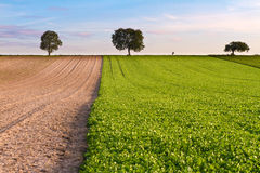 Fields with trees and walker, Pfalz. Germany Royalty Free Stock Images