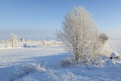 Fields and trees in winter farmland Stock Photo