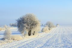 Fields and trees in winter landscapes Stock Photo