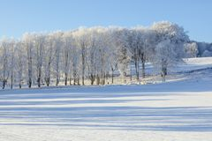 Fields and trees in winter landscapes Royalty Free Stock Photo
