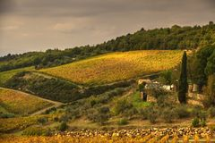 fields tuscan royaltyfria bilder