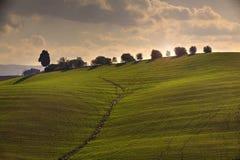 fields tuscan arkivfoto