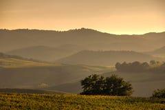 fields tuscan arkivfoton