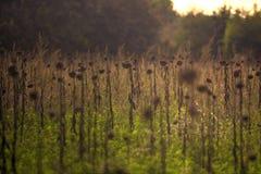 fields tuscan Стоковое Изображение RF