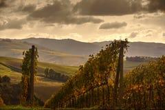 fields tuscan royaltyfri fotografi