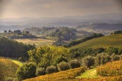 fields tuscan arkivbild