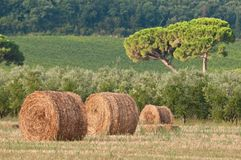 Fields of the Tuscan countryside Stock Photography