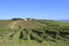 Fields of Tuscan Vineyards Stock Photo