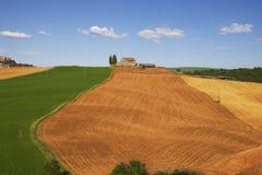 Fields of Tuscany Royalty Free Stock Image
