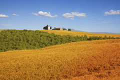 Fields of Tuscany, Italy Royalty Free Stock Image