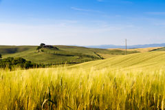 Fields in Tuscany, Italy Royalty Free Stock Image