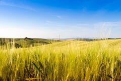 Fields in Tuscany, Italy Royalty Free Stock Photos