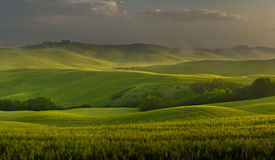 Fields of tuscany in the morning light Stock Image